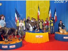 Foto Exposition Canine Internationale